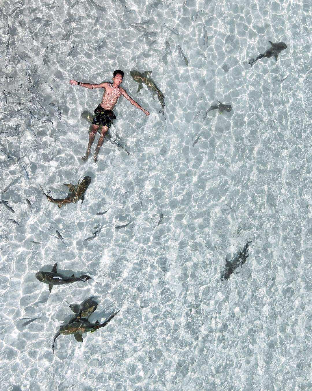 Mandi bersama ikan hiu di raja ampat, images from @nickoasmara