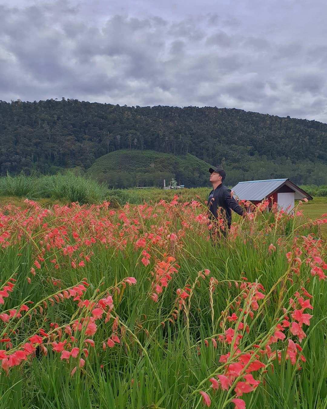 Padang Sabana di Anggi, Pegunungan Arfak. Images From @syam_ocean