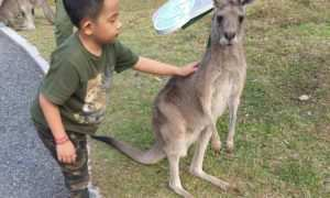 Berfoto Bersama Kanguru di Taman Safari Prigen, Image From @david_dk46
