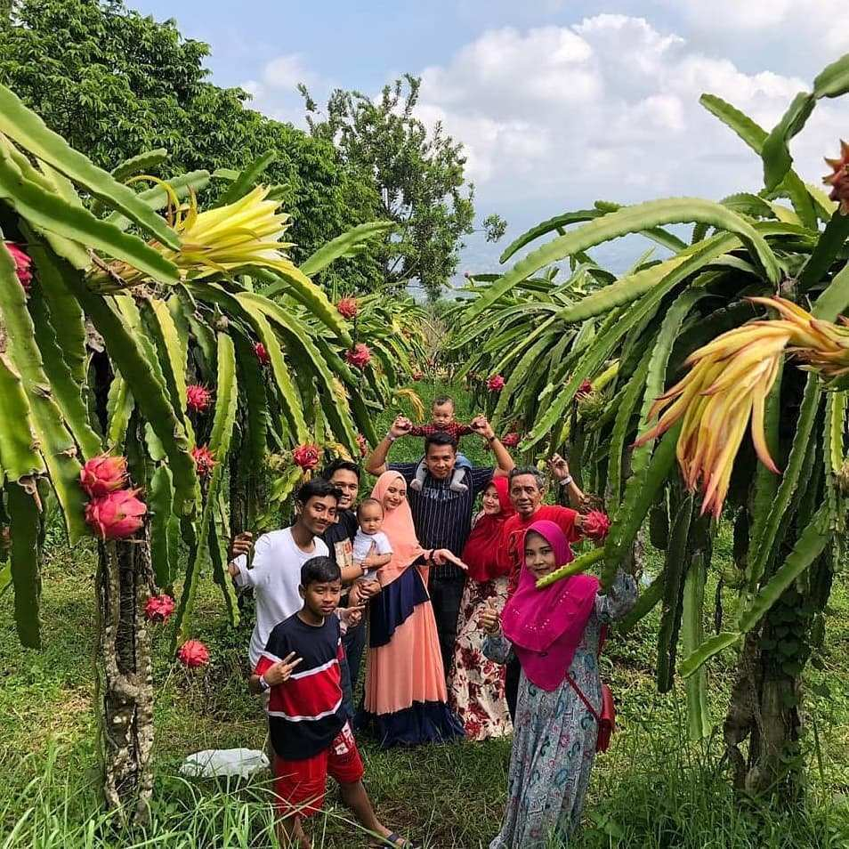 Berfoto di Kebun Buah Naga Kusuma Agro Wisata Image From @achmaddsyauqi