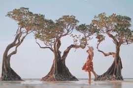Berfoto di Mangrove Pantai Walakiri Sumba, Image From @sedangliburan