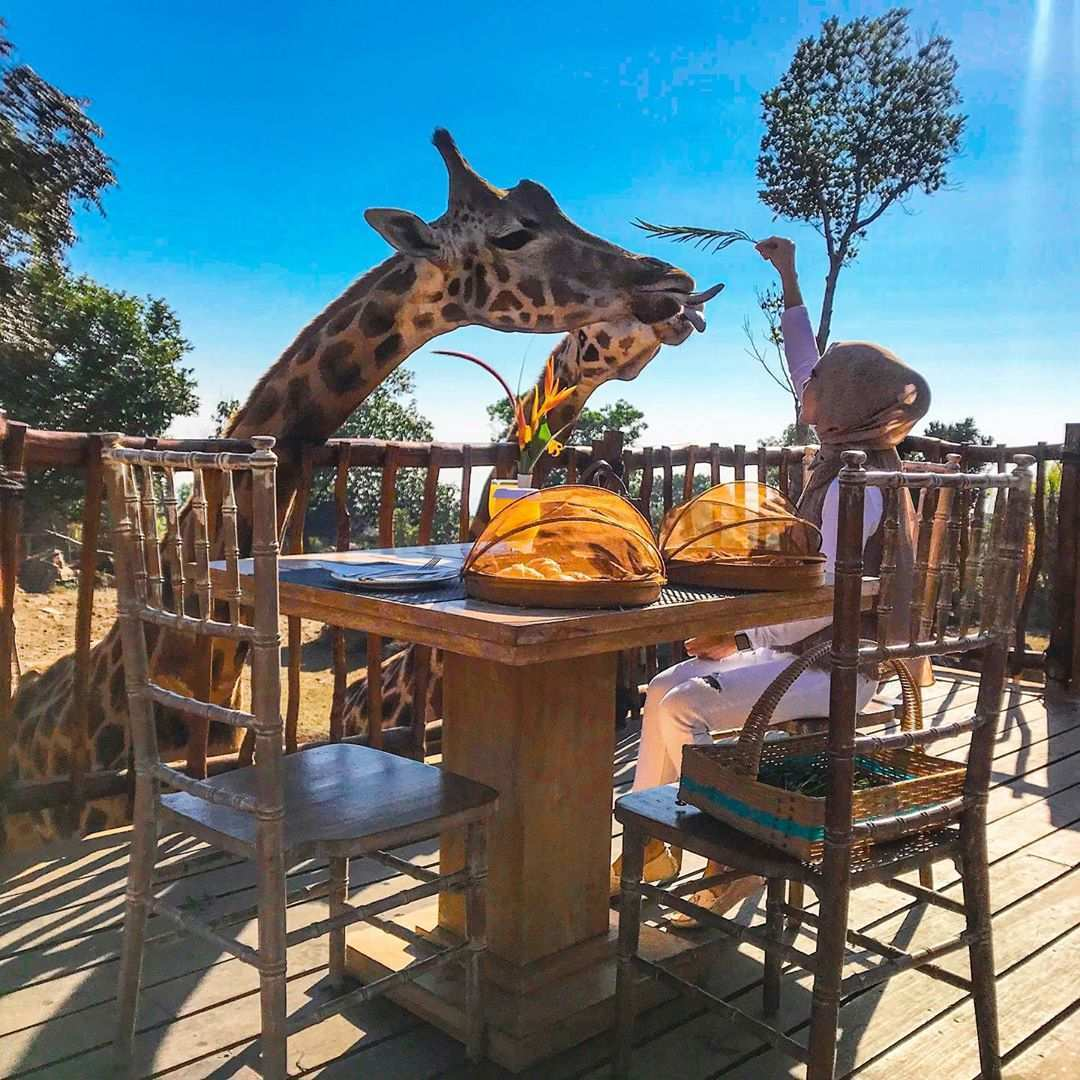 Makan Bersama jerapah di Taman Safari Prigen, Image From @rantaniarossa