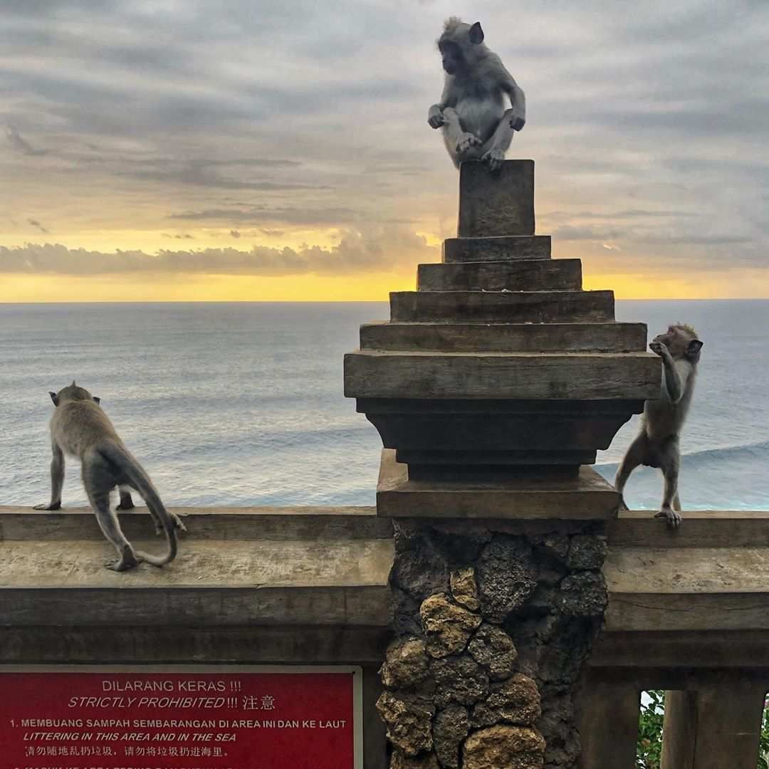 Melihat Monyet di Uluwatu Temple, Image From @btairey