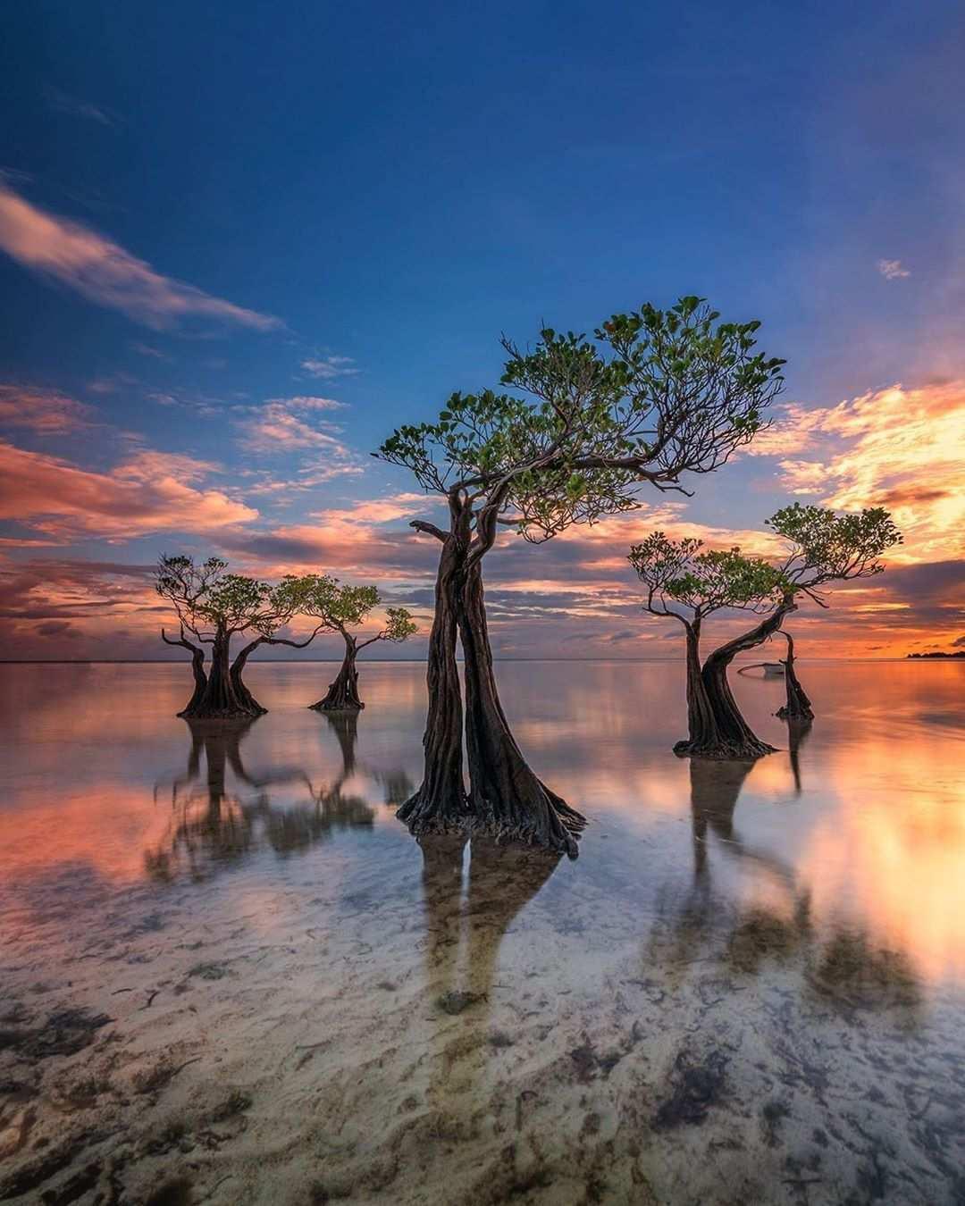 Pohon Mangrove Menari di Pantai Walakiri, Image From @saragih_erick