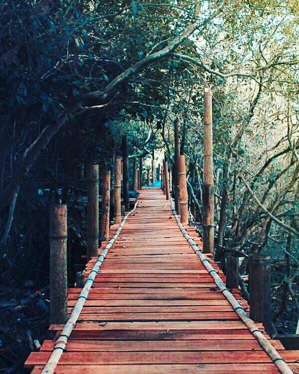 Jalan di Hutan Mangrove Kulon Progo, Image From @bobona_kecil20