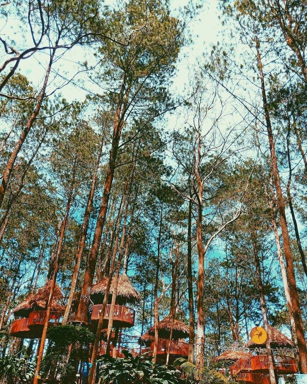 Sky Treetop di Kopeng Treetop Semarang, Image From @antonzvideochannel