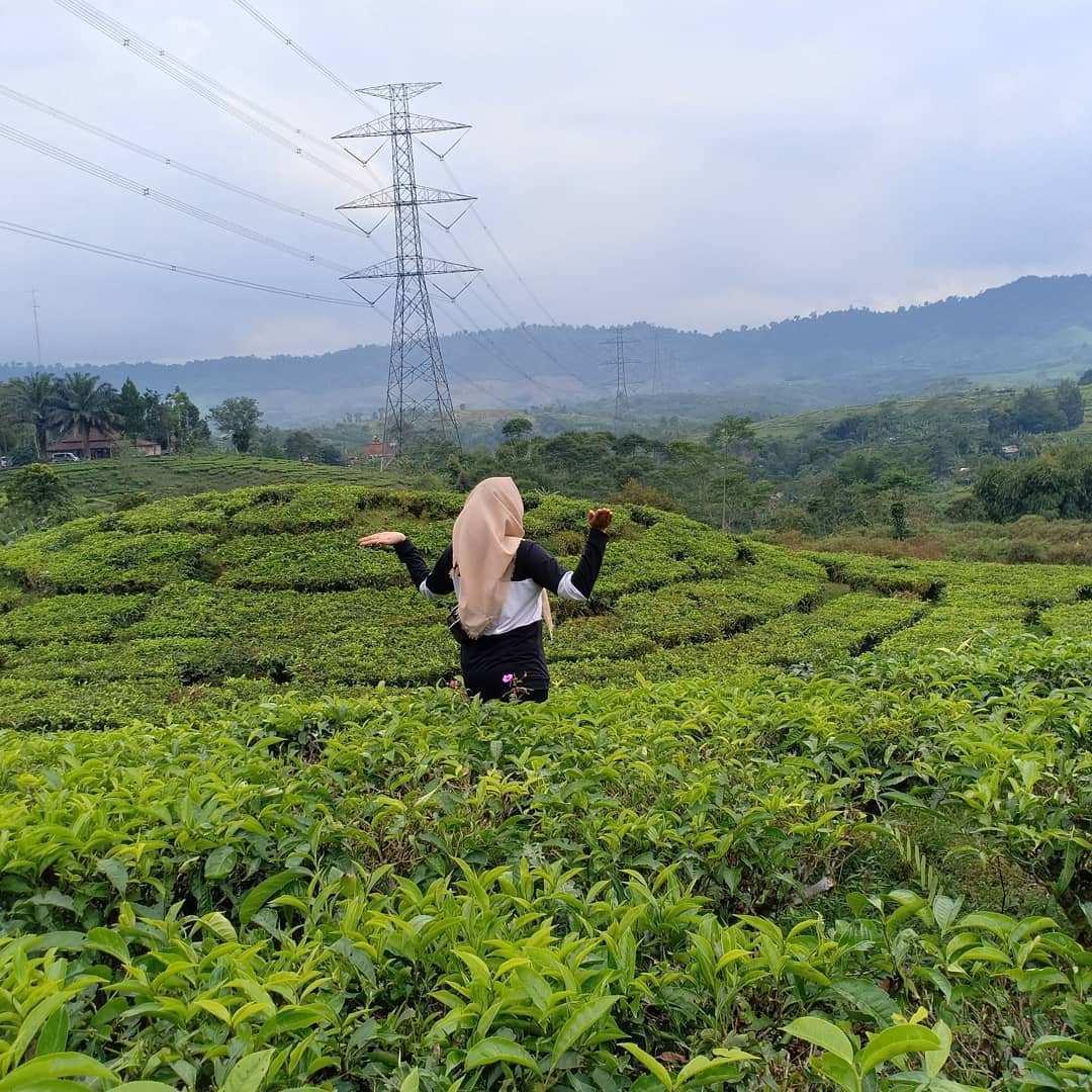 Berfoto di Kebun Teh Cianten Bakukung Image From @nongnach32