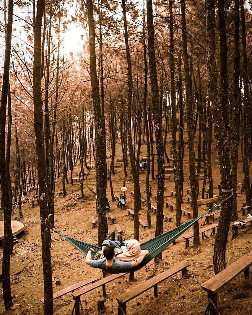 Hutan Pinus di Cianten Bakukung Image From @wildanthuco