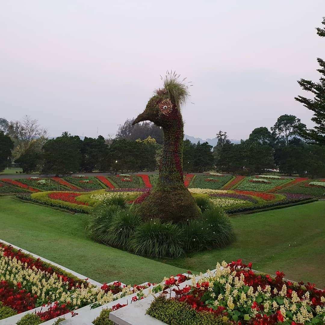 Taman Bunga Berbentuk Merak Image From @indragram8