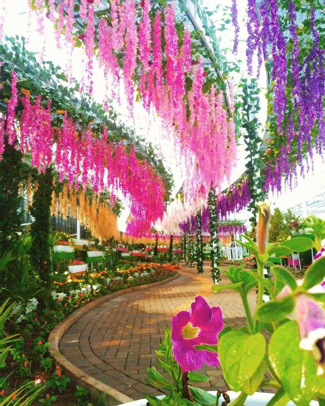 Warna warni bunga di wisata Florawisata San Terra Malang Image From @florawisata.santerra