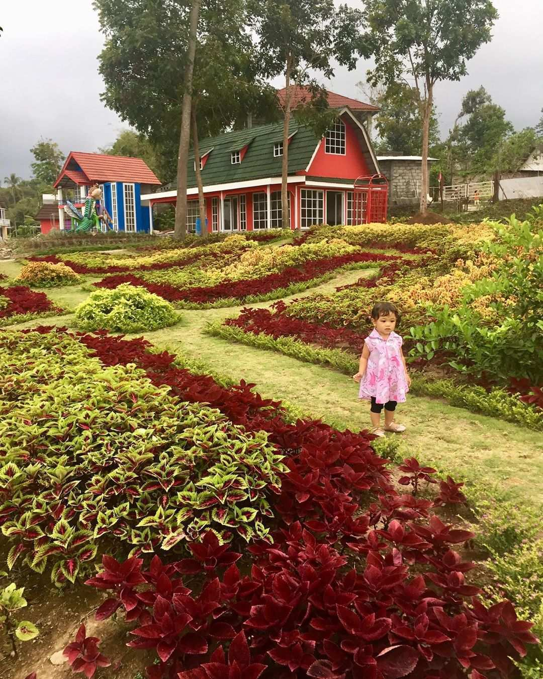 Suasana di Alamanda Jogja Flower Garden Image From @fikri_pandela