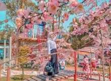 Berfoto Dengan Banyaknya Bunga di Istana Sakura, Image From @_miraridyaseptya