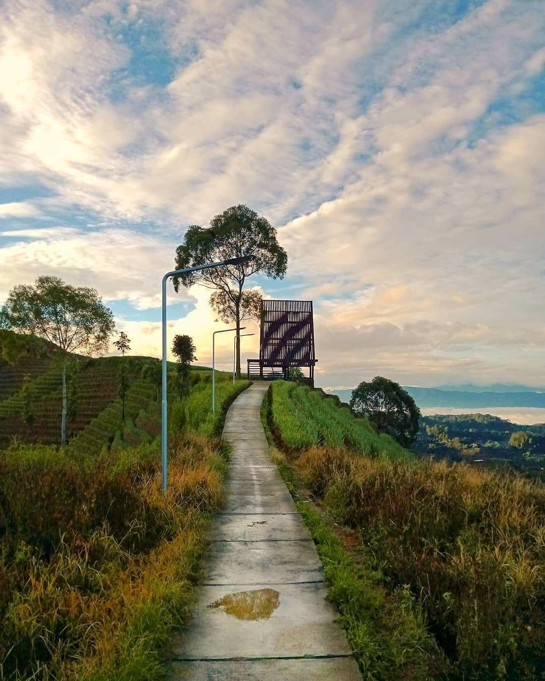 Pemandangan Jalan Setapak di Terasering Panyaweuyan, Image From @rikza_zainul_umam