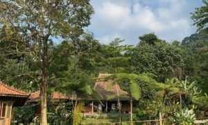 Pemandangan Joglo dan Persawahan di Sawah Segar Sentul Bogor, Image From @sawahsegarsentul