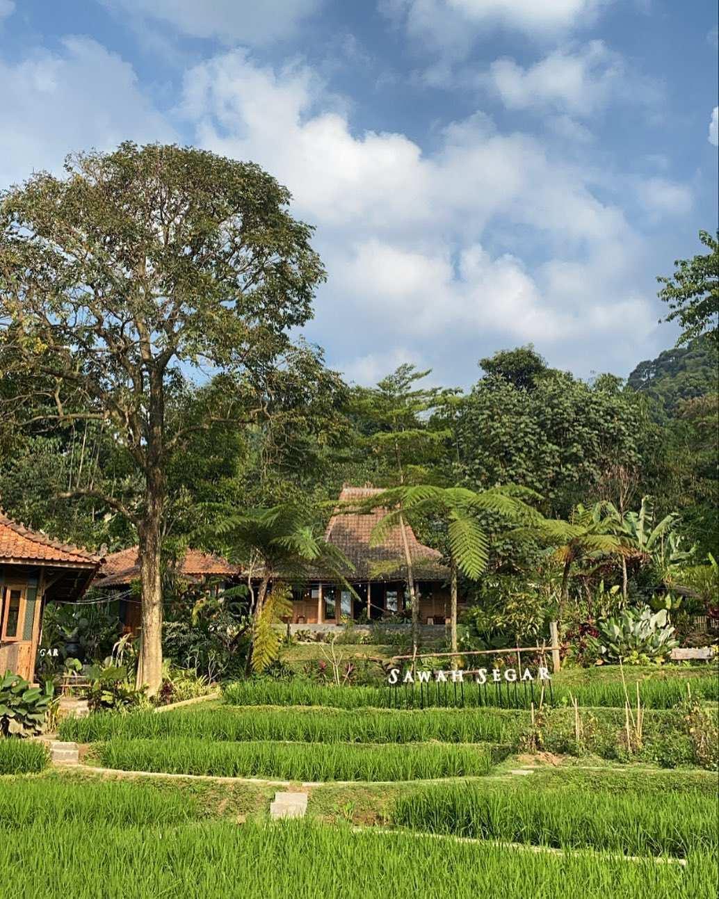 Pemandangan Joglo dan Persawahan di Sawah Segar Sentul Bogor Image From @sawahsegarsentul