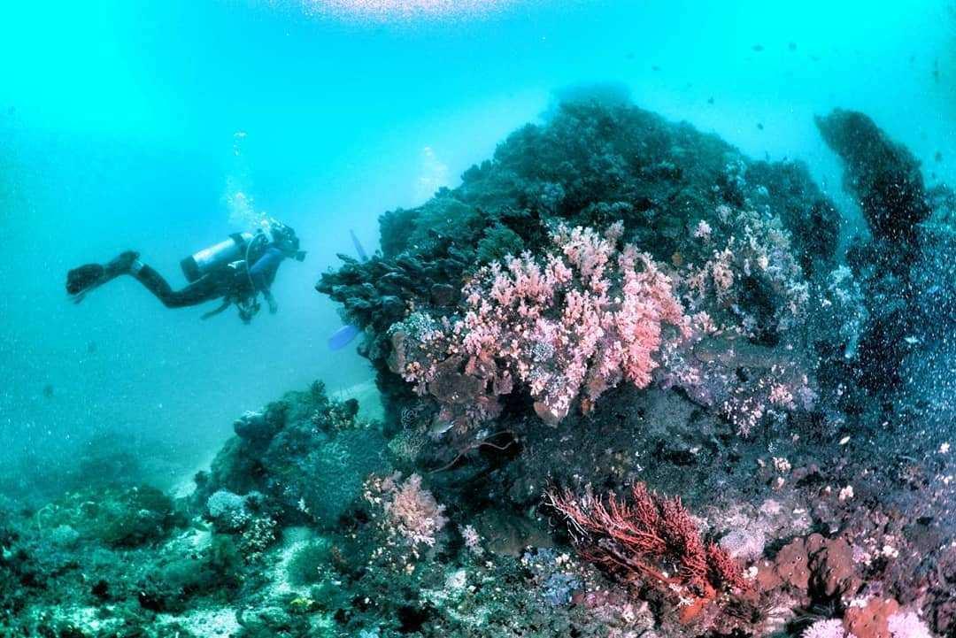 Diving di Bangsring Underwater Banyuwangi Image From @divewonderfulindonesia