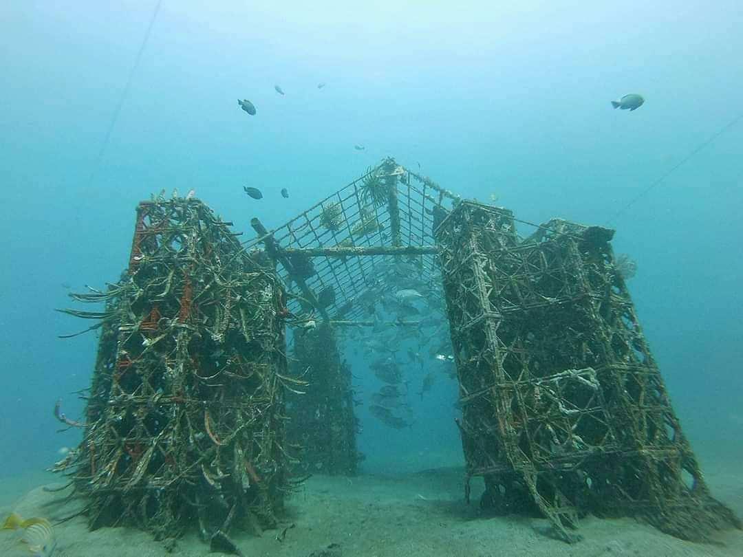 Konservasi Terumbu Karang di Bangsring Underwater Banyuwangi Image From @bangsringunderwater