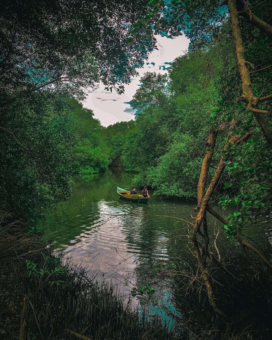 Hijaunya Pmandangan Di Mangrove PIK Jakarta Image From @senjamaya
