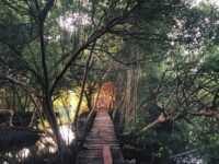 Jalan di Kawasan Wisata Mangrove PIK Image From @andrizhang 200x150