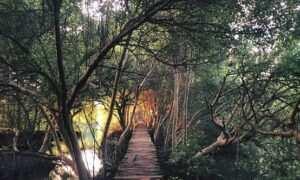 Jalan Di Kawasan Wisata Mangrove PIK Image From @andrizhang