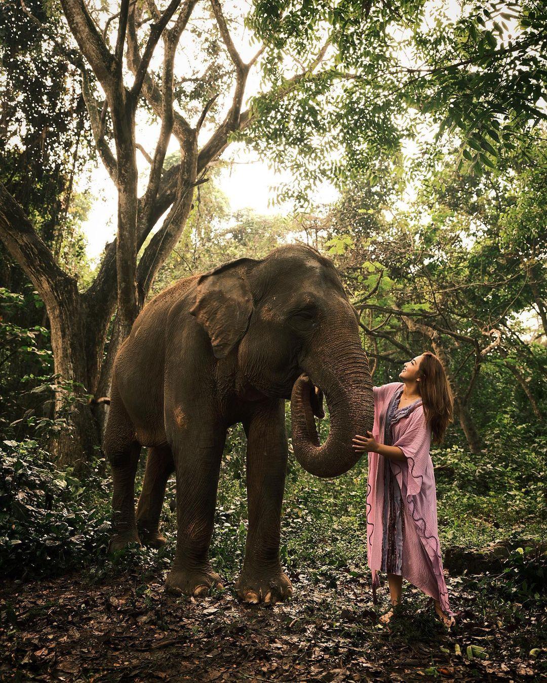 Berfoto Dengan Gajah Di Bali Safari Image From @ashanty_ash