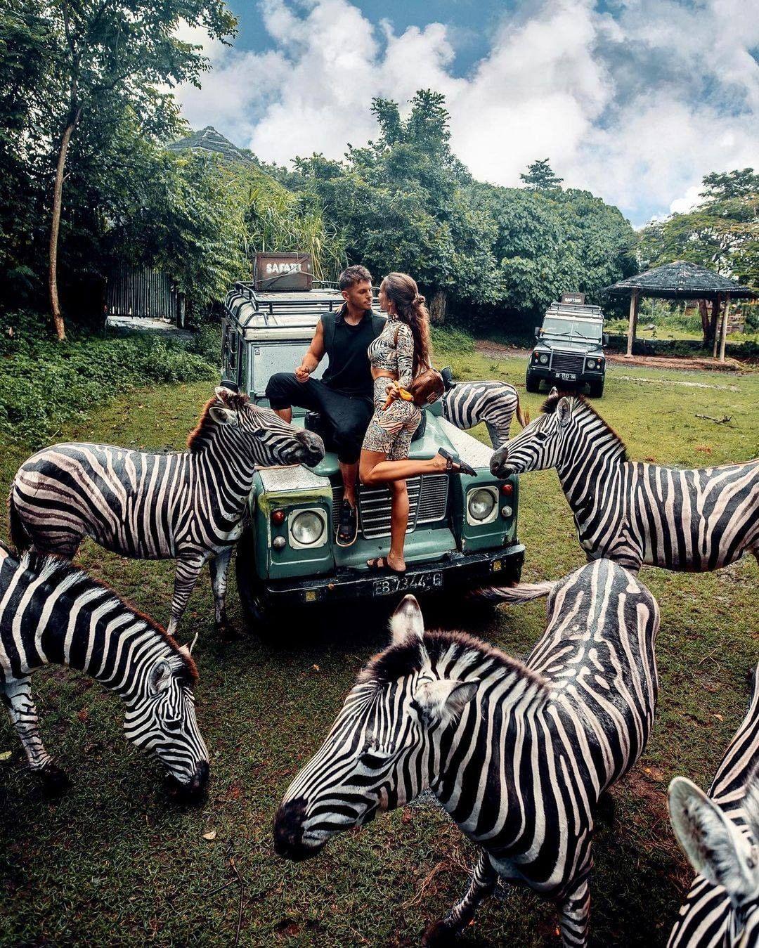 Berfoto Dengan Zebra Di Bali Safari Image From @baligolive
