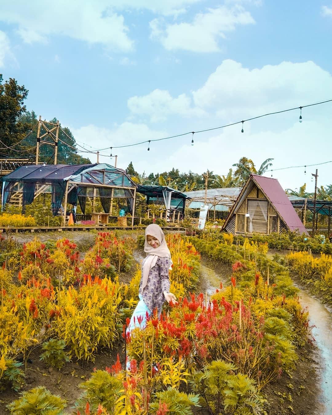 Bunga Di Tapos Garden Image From @rizkadewif