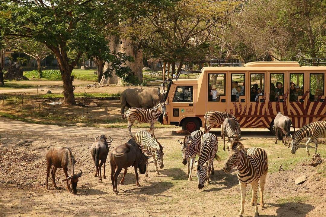Bus Safari Di Bali Safari Image From @todmcpvtltd