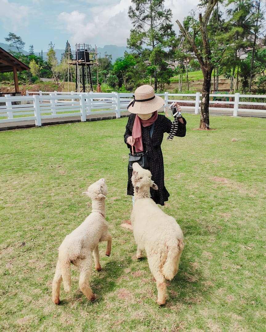 Memberi Makan Domba Di Cimory Dairyland Puncak Image From @laisahardyn
