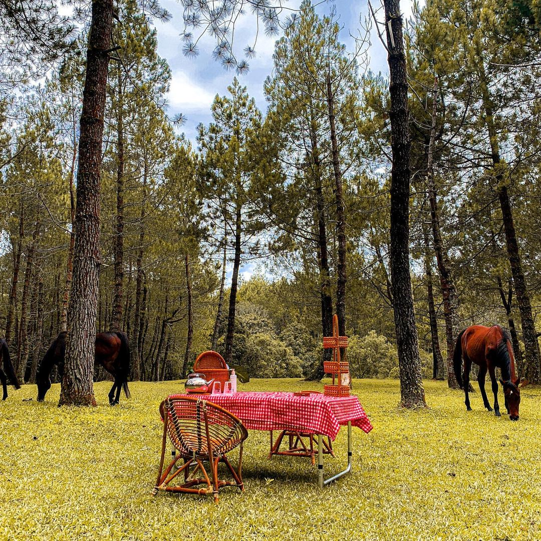 Pemandangan Di Jungle Milk Lembang Image From @sukamanja_bdg