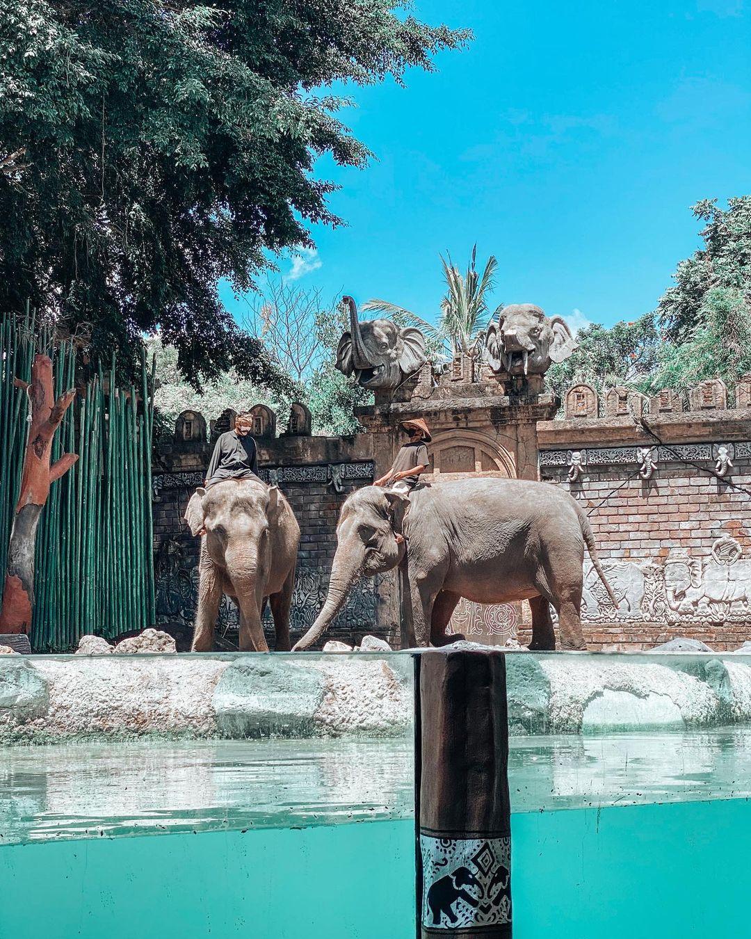 Pertunjukan Gajah Di Bali Safari Image From @mesasaw