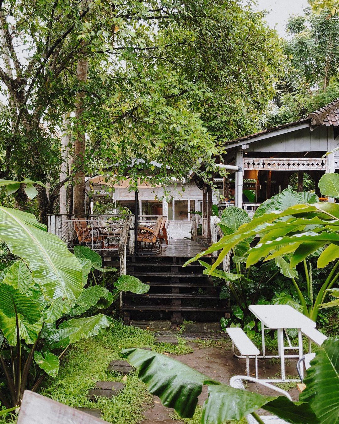 Hijaunya Alam Di Cafe Lusi Dan Pakan Bali Image From @cafephiles